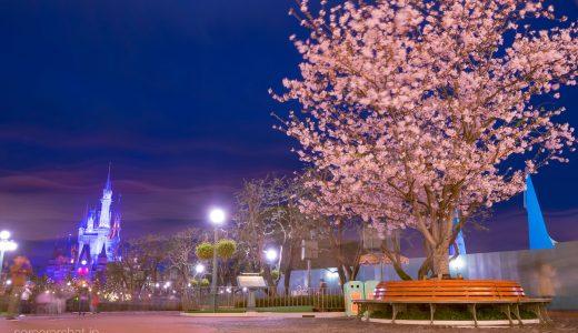 東京ディズニーリゾートの夜桜スポット