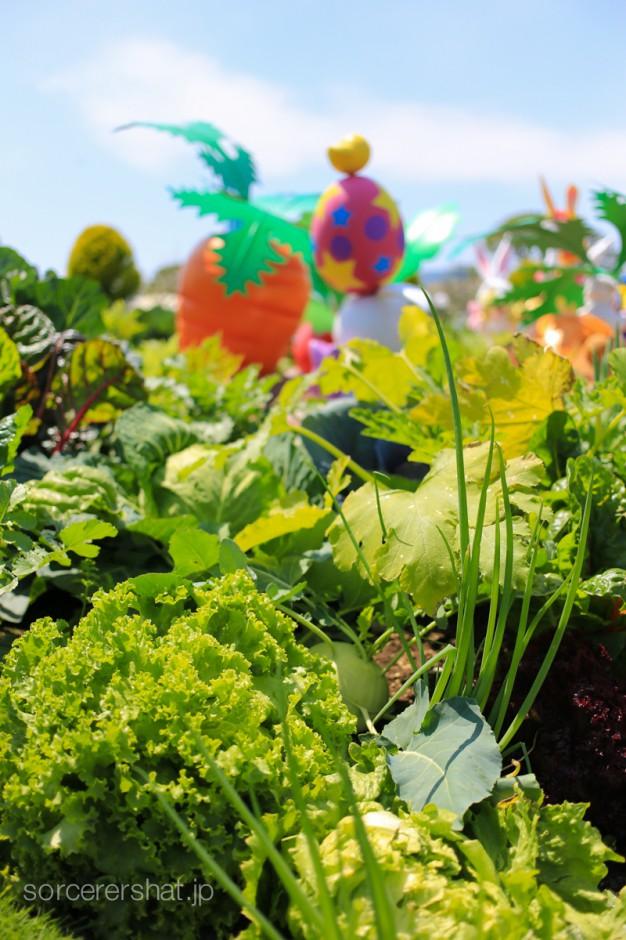 フォトロケには本物の野菜が植えられてます